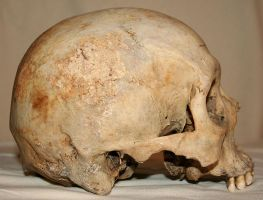 Skull Stock Photo 06 by Aleuranthropy