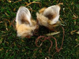 Coyote Ears Headband - For Sale! by SPWilder