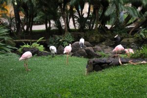 FLAMINGOES IN HAWAII 2 by HumbleLuv