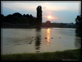 Ducks in Sunset by Dan4ArChAnGeL