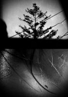 the body of tree by FilobZh