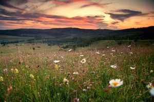 flower field V by iustyn
