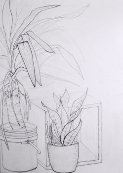 Still Life Contour Drawing by FrozenFerocity