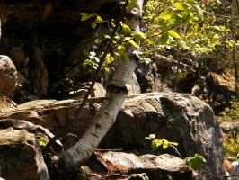 Close up Tree and Rocks by iluvobiwan91