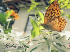 nature by inkheart33