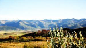 Sagebrush and a view by rawREN
