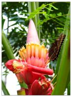 flower and butterfly by nagham
