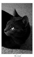 The Look - 2 by cat-lovers