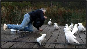How to Photograph Cockatoos by FireflyPhotosAust