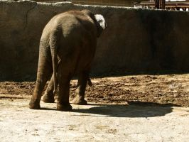 Elephant I by Baq-Stock