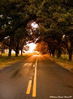 The Evening Country Road by georgiaartist