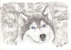 Wolf UPDATED by carriephlyons