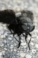 Monster Black Fly by Anachronist84
