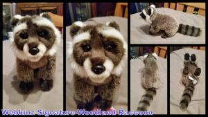 Webkinz Signature Woodland Raccoon by Vesperwolfy87