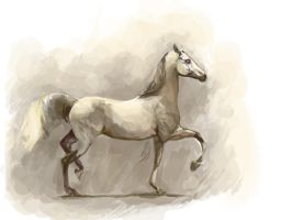 a grey arab speedpaint by howlinghorse