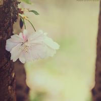 blossom by CliffWFotografie