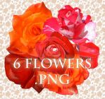 6 flowers PNG format by ForestGirlStock