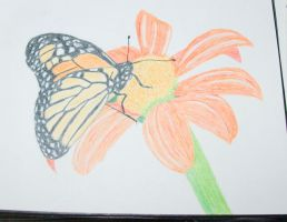 colred pencil drawing of a butterfly. by mikesphotos-drawings
