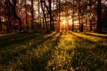 Sunset Woodland by scotto