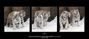 White tigers2 by red-FeNIks