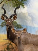 Kudu Cow and Bull by obsidianhart