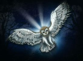Barn Owl by Featherhaze