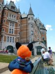 StupidFox in Quebec by Stygma