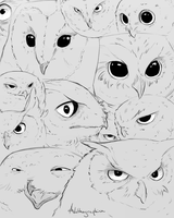 Owl Sketches by Alithographica