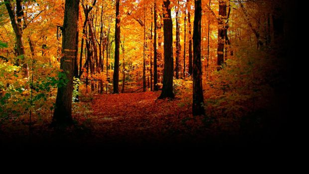 autumn by christinemarie33