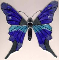butterfly by toroj