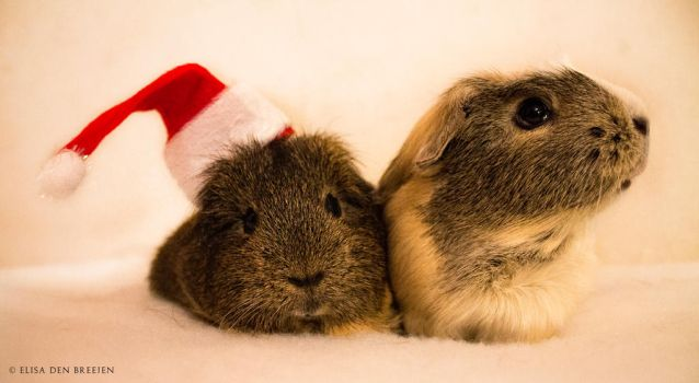 Christmas piggies ! by JustLikeSnow
