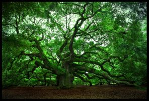 The Angel Oak by SteelAtlas