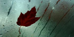 Canadian Fall by AdonisWerther