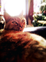 my cat is prettier than me by Miss-Smutty