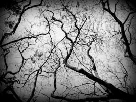 Spiderweb of trees by silveranklets