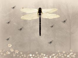 Dragonfly by sandpiperw