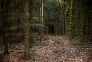 Stock... New Forest 2 by RhysBriers
