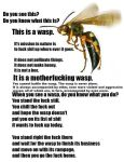 Wasp Warning by skittylover23