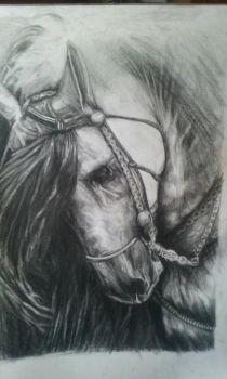 Horse  by chef1847