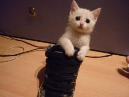LOOK AT MY CAT IN MY SHOE by Skailak