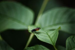 Little Bug on a Leaf by photobfurness