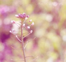Feel the spring by alina0
