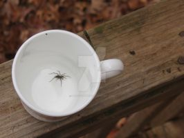 Spider In A Cup by AokitianWolf