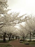 Full Bloom 2012 03 by freyiathelove