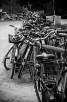 bicycles by Lecosa