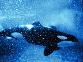 orca wallpaper... by annlo13