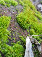 Moss by Trumpeteer34