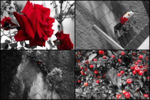 My Red Collection by ezy94