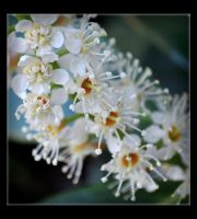 Spring Wonders by Forestina-Fotos