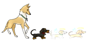 Ames and Kevs dogs by Blackwolf008